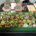 Okresní zahrádkáři vystavují své klenoty v pardubické Reálce