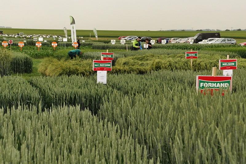 Výstava Naše pole v Nabočanech na Chrudimsku - různé druhy obilovin